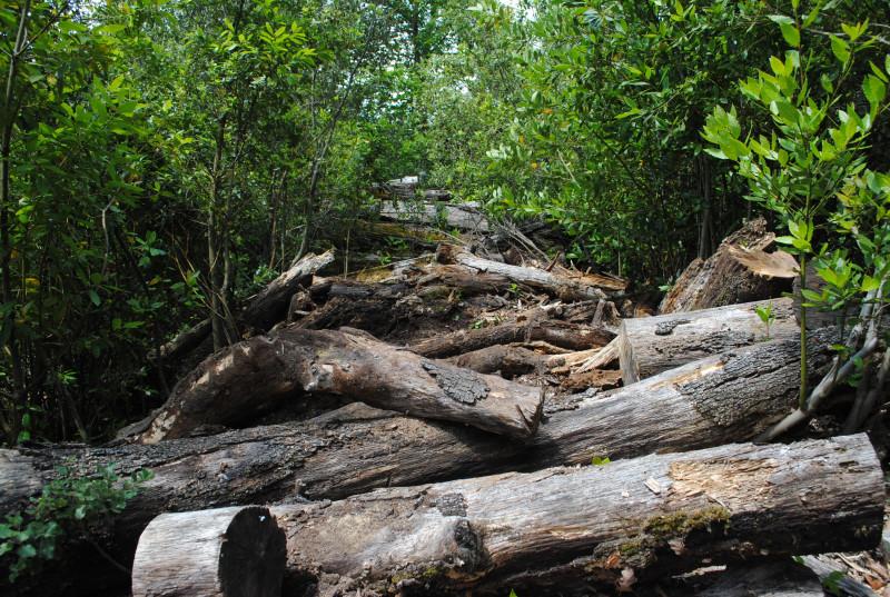 O.E.E. ONTOLOGICAL ECOLOGY OF ECHOS: When nature takes back